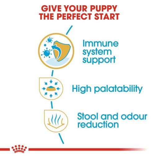 rc bhn puppychihuahua cv eretailkit 3 1 - Royal Canin - Chihuahua Puppy