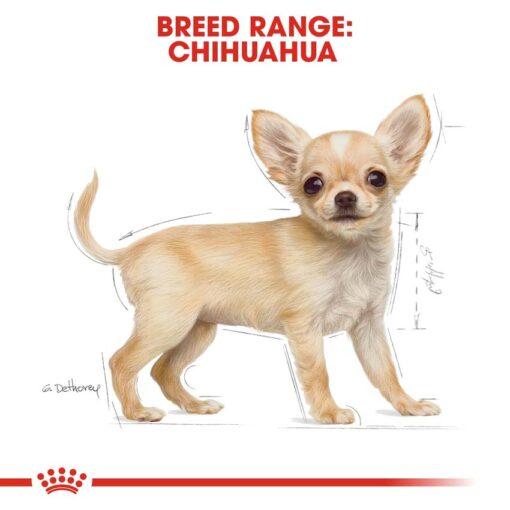 rc bhn puppychihuahua cv eretailkit 4 1 - Royal Canin - Chihuahua Puppy