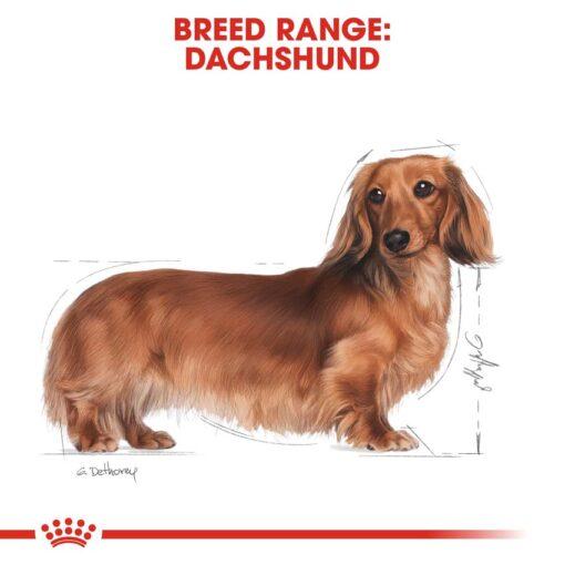rc bhn wet dachshund cv eretailkit 1 - Royal Canin - Adult Dachshund Wet Food