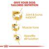 rc bhn wet dachshund cv eretailkit 3 - Royal Canin - Adult Dachshund Wet Food