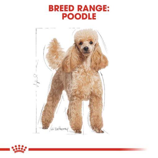 rc bhn wet poodle cv eretailkit 1 - Royal Canin - Adult Poodle Wet Food