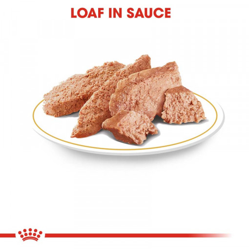 rc bhn wet yorkshire cv eretailkit 2 - Royal Canin - Adult Yorkshire Terrier Wet Food