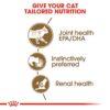 rc fhn wet ageing12gravy cv eretailkit 2 1 - Royal Canin - Feline Health Nutrition Ageing +12 Gravy