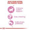 rc fhn wet kitteninstinctivegravy cv eretailkit 2 - Royal Canin Feline Health Nutrition Kitten Gravy