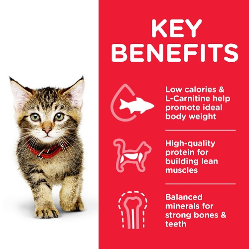 CAT Kitten Chicken Can Transition Benefits 603984 - Hill's Science Plan – Kitten Can Cat Food with Chicken
