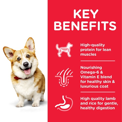 DOG Adult SM Lamb Transition Benefits 604344 - Hill's Science Plan Canine Adult Small & Mini with Chicken