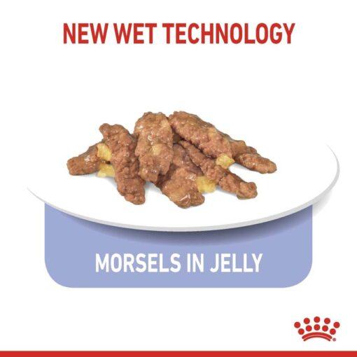 rc spt wet ind7sterjelly cv 3 med. res. basic 402855 - Royal Canin Feline Health Nutrition Indoor 7+ Jelly