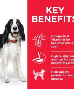 DOG Adult Medium Lamb Transition Benefits 1 604357 - Deals