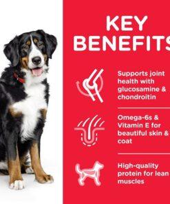 DOG Adult Large Chicken Transition Benefits 604387 - Deals