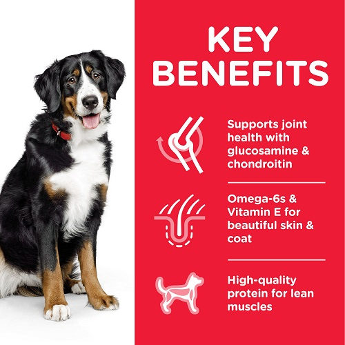 DOG Adult Large Chicken Transition Benefits 604387 - Hill's Science Plan Large Breed Adult Dog Food With Chicken