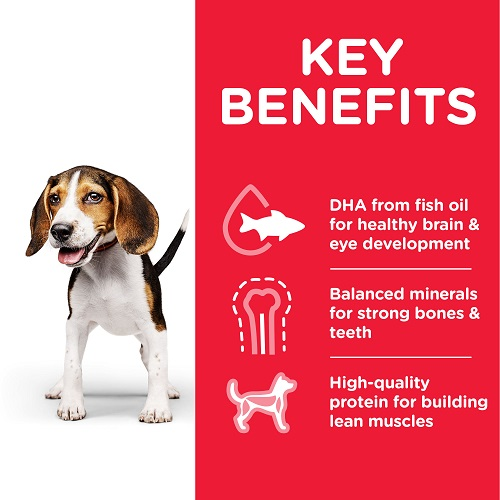 DOG Puppy Chicken Can Transition Benefits 604220 - Hill's Science Plan Puppy Wet Food With Chicken
