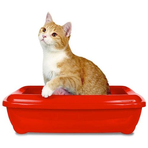 Simple Solution Cat Litter Odour Eliminator 4 - Cat Litter Odor Eliminator