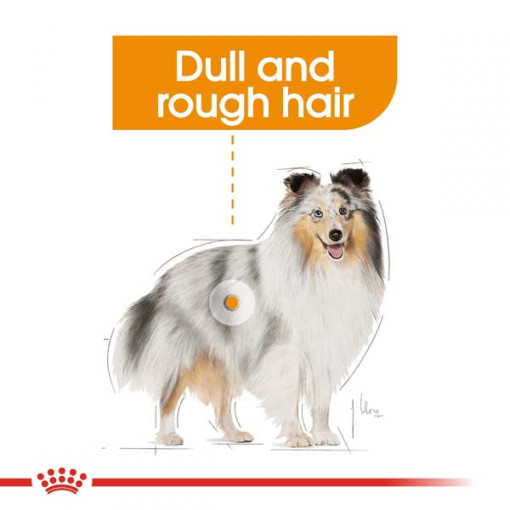 rc ccn wet coat cv eretailkit 1 - Royal Canin Canine Care Nutrition Coat Beauty