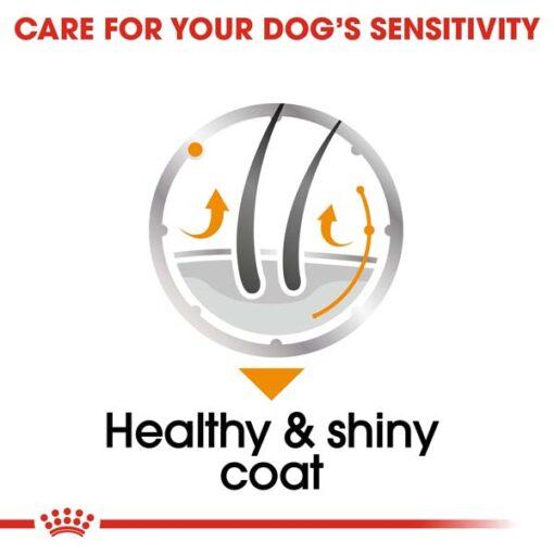 rc ccn wet coat cv eretailkit 3 - Royal Canin Canine Care Nutrition Coat Beauty