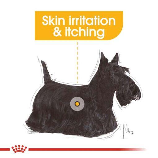 rc ccn wet dermacomfort cv eretailkit 1 - Royal Canin Canine Care Nutrition Dermacomfort
