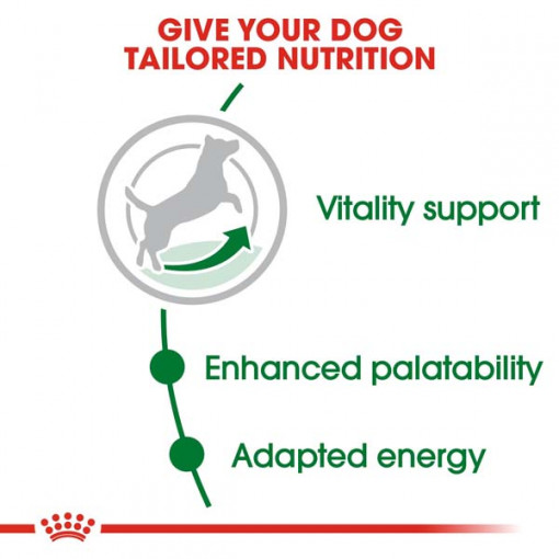 rc shn adultmini8 cv eretailkit 2 1 - Royal Canin Size Health Nutrition Mini Adult 8+