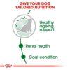 rc shn ageingmini12 cv eretailkit 2 - Royal Canin - Size Health Nutrition Mini Ageing 12+