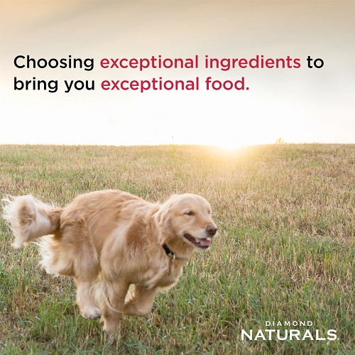 puppy lamb rice 5 - Diamond Naturals All Life stages Dog Chicken & Rice Formula