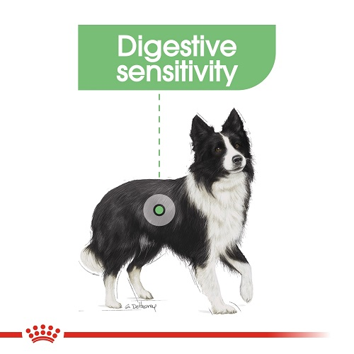 rc ccn digestivemedium cv eretailkit 2 1 - Royal Canin - Canine Care Nutrition Medium Digestive Care