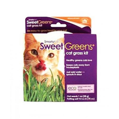 09700 1000x1000 1 - SmartyKat Sweet Greens Kit Cat Grass Grow Kit