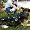 FoamCare Pet Shampoo 2 - Vetericyn FoamCare Pet Shampoo Thick Coats
