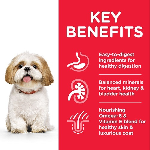 604343 DOG MA SM Chicken Transition Benefits - Hill's Science Plan - Small & Mini Mature Adult 7+ Dog Food With Chicken