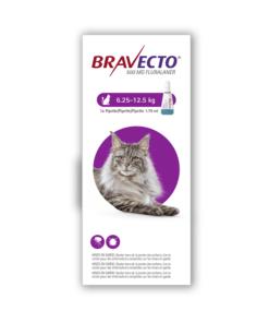 Bravecto Cat MaineCoon 1chew copy - Deals