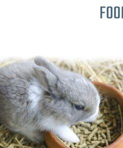 Small Pets Food