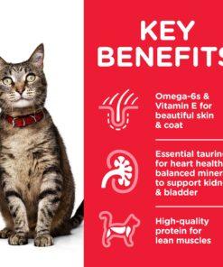 CAT Adult Chicken Transition Benefits - Deals