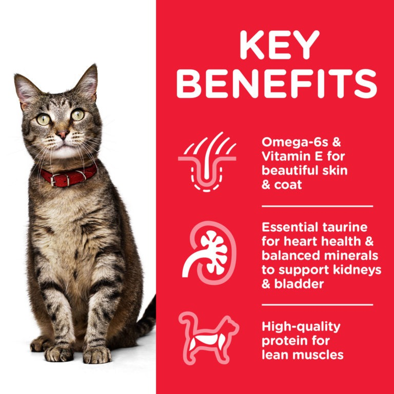 CAT Adult Chicken Transition Benefits - Hill's Science Plan - Adult Cat Food With Chicken