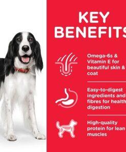 DOG Adult Medium Chicken Transition Benefits 1 - Deals