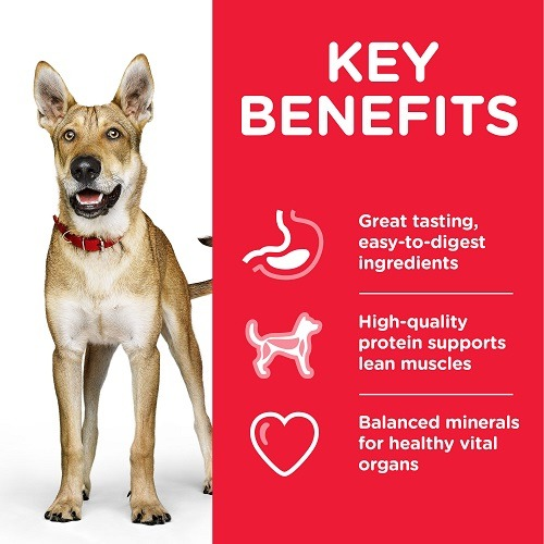 DOG Adult Performance Chicken Transition Benefits 1 - Hill's Science Plan – Performance Adult Dog Food With Chicken