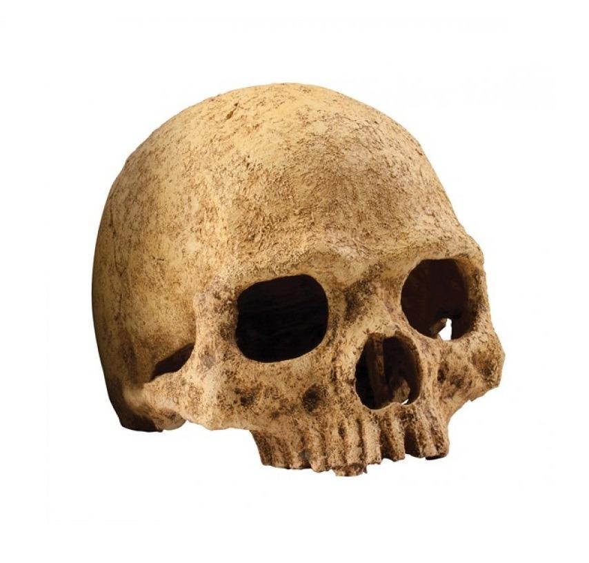 HAPT2855 - Exo Terra -Terrarium Decor Primate Skull