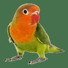 avian petpro 1 - Home