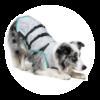 cooling vest - MPS - Dry Cooling Vest Dog