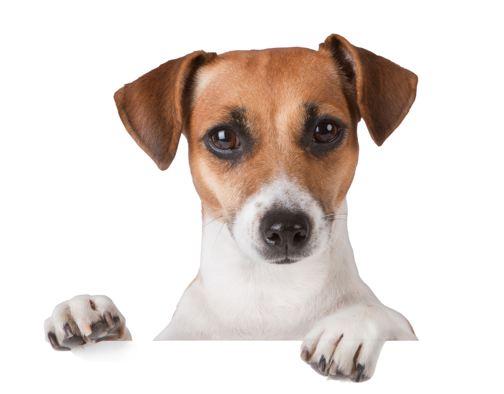 dog PNG50375 - Autoship