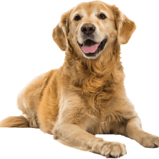 dog petpro - Home