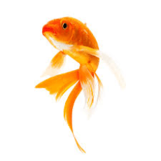 fish petpro - Home