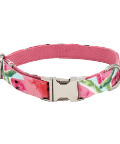 hanz and oley watermelon dog collars - Deals