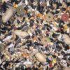 parrot food - Farma - Parrot Food