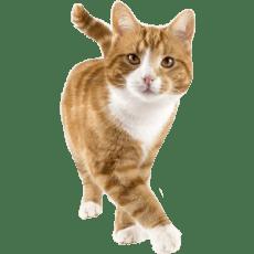 petpro cats - Home
