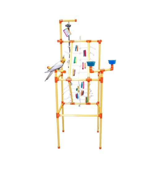 playgym scaled - Zoo Max - Playgym