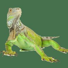 reptile petpro - Home